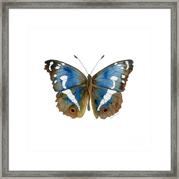78 Apatura Iris Butterfly Framed Print