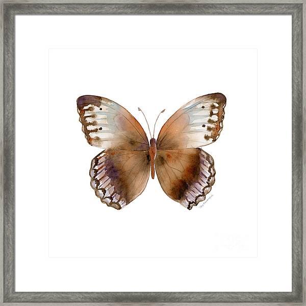 79 Jungle Queen Butterfly Framed Print