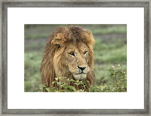 Africa, Tanzania, Serengeti Framed Print