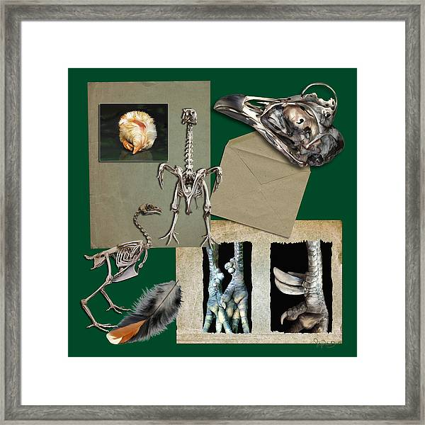 8. Chook Parts Framed Print