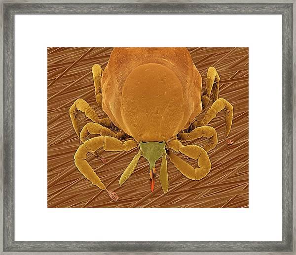 Deer Tick (ixodes Scapularis) Framed Print by Dennis Kunkel Microscopy/science Photo Library