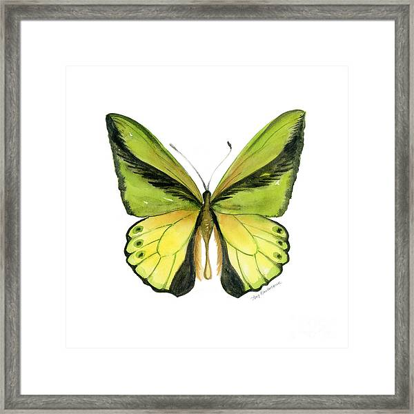 8 Goliath Birdwing Butterfly Framed Print