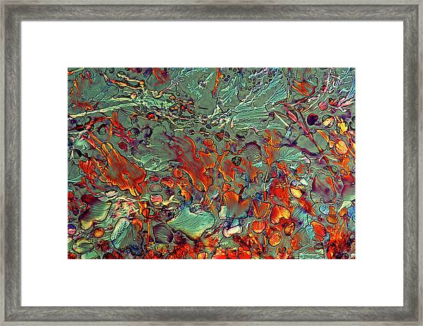 Haematoxylin Crystals Framed Print by Marek Mis