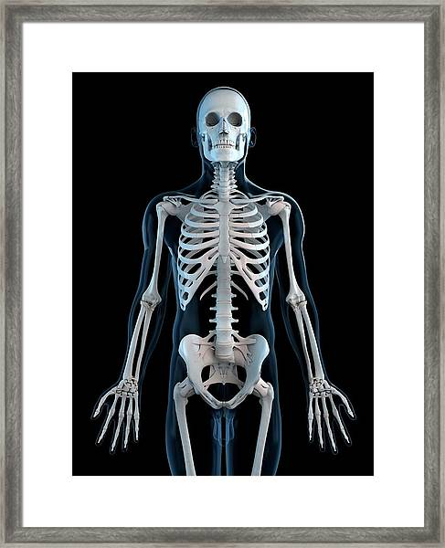 Human Skeleton, Artwork Framed Print