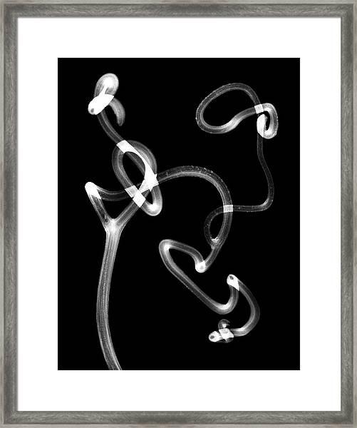 Plant Tendrils Framed Print by Albert Koetsier X-ray