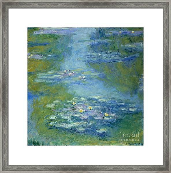 Waterlilies Framed Print