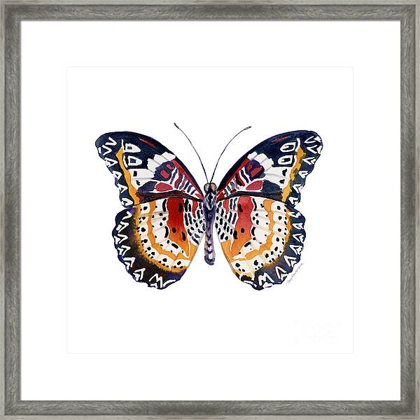 94 Lacewing Butterfly Framed Print