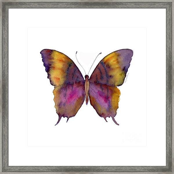 99 Marcella Daggerwing Butterfly Framed Print