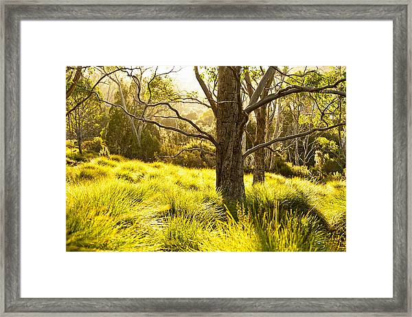 A Bare Tree Framed Print