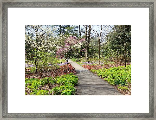 A Beautiful Spring Walk Framed Print