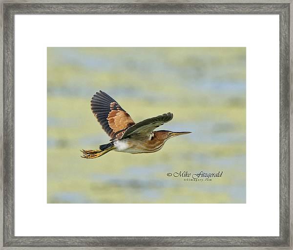 A Bit Of Flight Framed Print