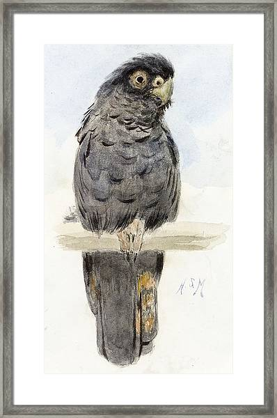 A Black Cockatoo Framed Print