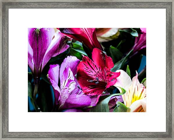 A Bouquet Of Peruvian Lilies Framed Print