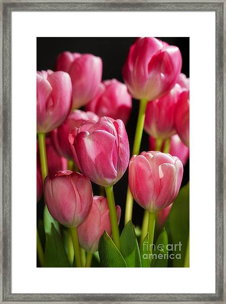 A Bouquet Of Pink Tulips Framed Print