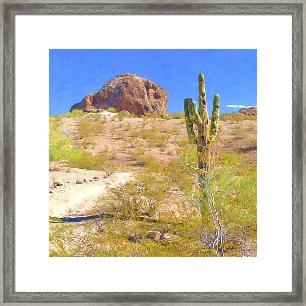 A Cactus In The Arizona Desert Framed Print