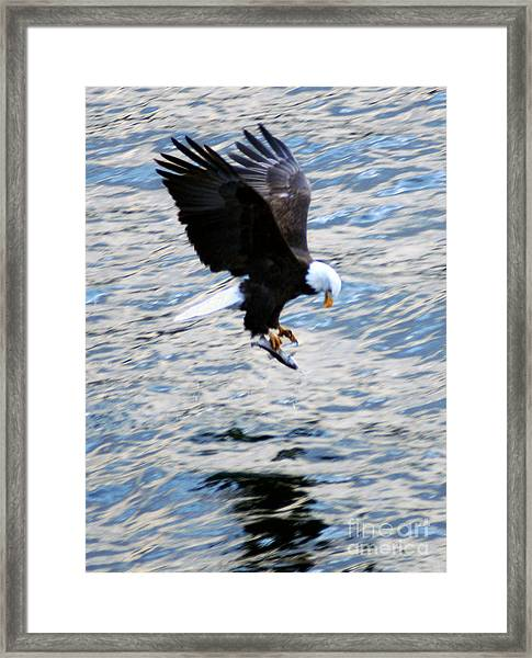 A Catch Of Life Framed Print
