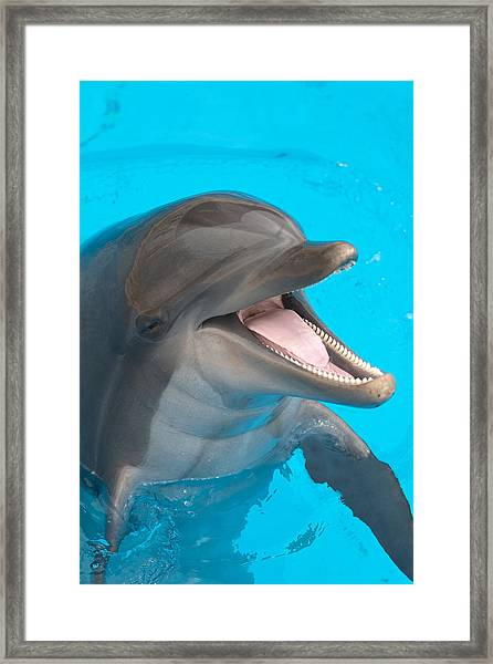 A Close-up Of A Happy Dolphin Swimming Framed Print by To_csa