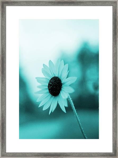 A Cold Sun Framed Print