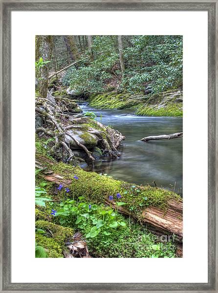 A Creek Side Hike Framed Print