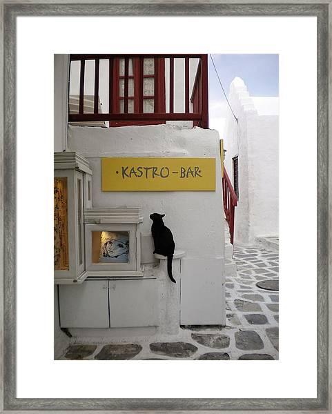 A Curious Cat In Mykonos Framed Print