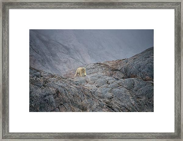 A Curious Polar Bear Approaching A Boat Framed Print