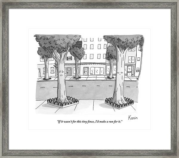 A Disgruntled Tree Looks At The Small Fence Framed Print