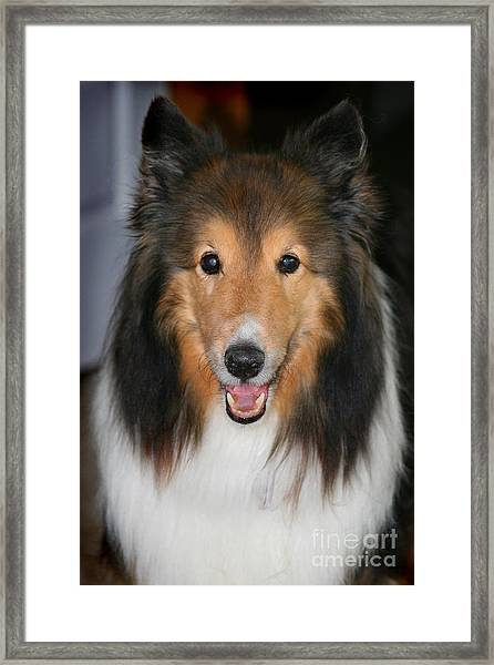 A Dog Named Beau Framed Print
