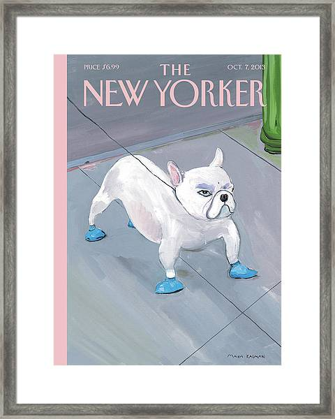 A Dog Wears Shoes On The City Sidewalk Framed Print