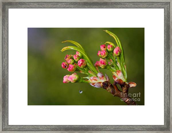 A Drop Of Water Framed Print