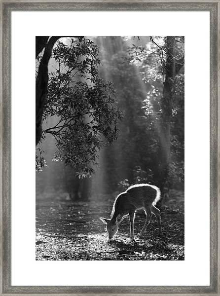 A Fawn In The Forest Framed Print