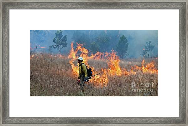 A Firefighter Ignites The Norbeck Prescribed Fire. Framed Print