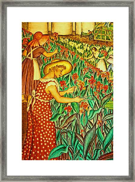 A Flower Harvest Framed Print