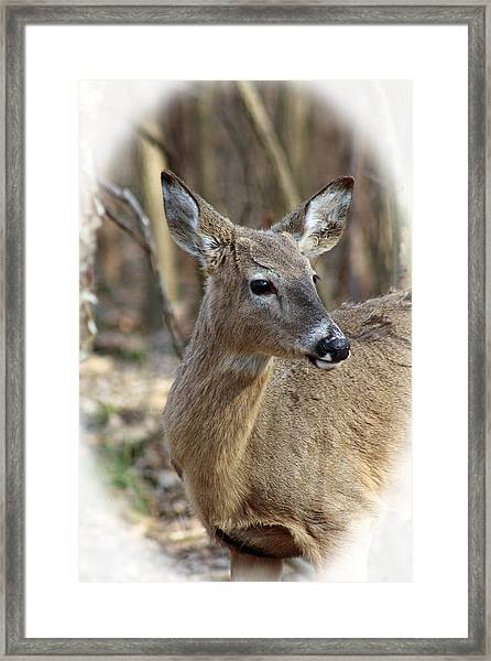 A Forest Beauty  Framed Print