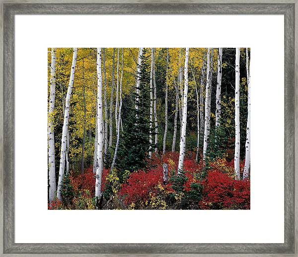 A Forest Of Color Framed Print