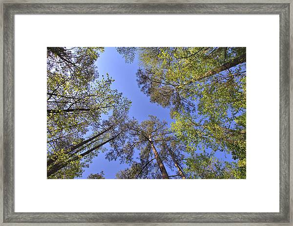 A Forest Sky Framed Print