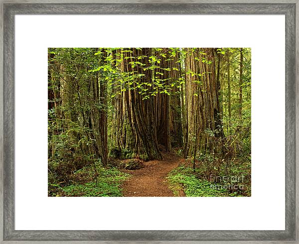 A Forest Welcome Framed Print