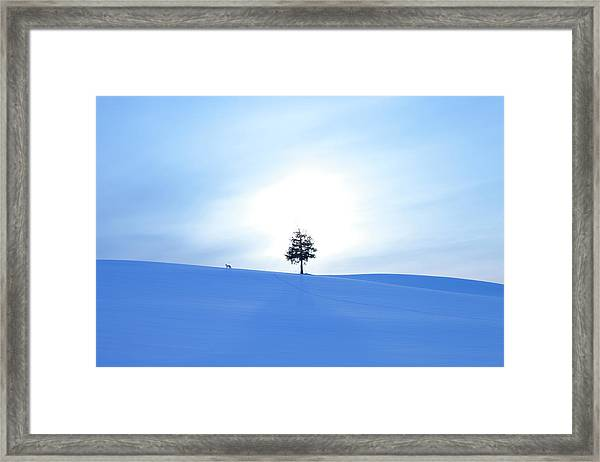 A Fox And A Tree In Snow Field Framed Print by Ichiro