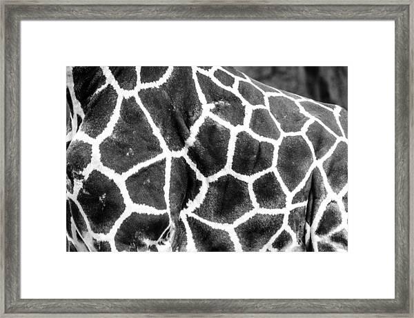 A Giraffe's Maze Framed Print