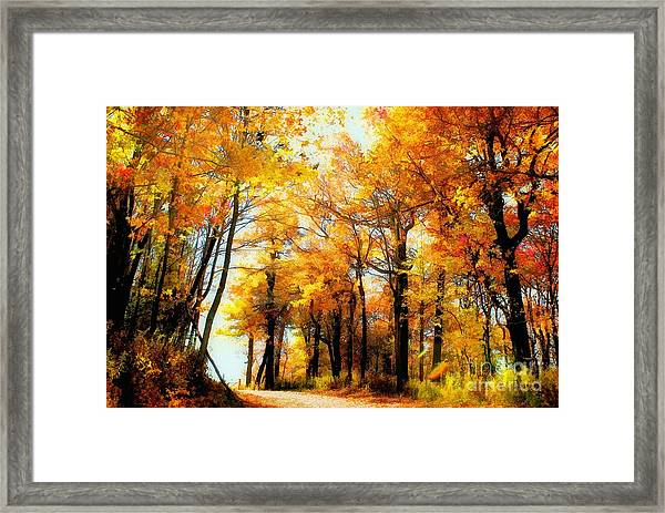 Framed Print featuring the photograph A Golden Day by Lois Bryan