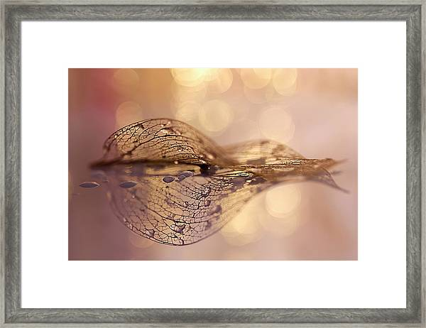 A Golden Leaf Framed Print