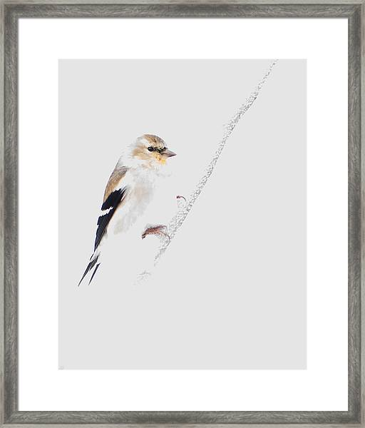 A Gray Winter's Day Framed Print
