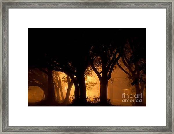 A Grove Of Trees Surrounded By Fog And Golden Light Framed Print