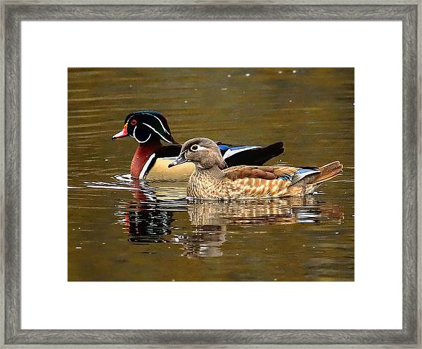 A Handsome Pair Framed Print