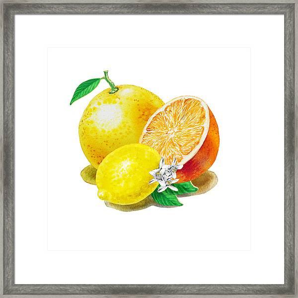 A Happy Citrus Bunch Grapefruit Lemon Orange Framed Print