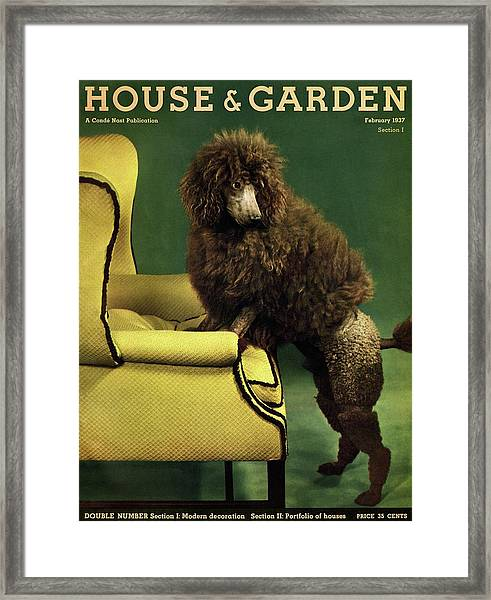 A House And Garden Cover Of A Poodle Framed Print