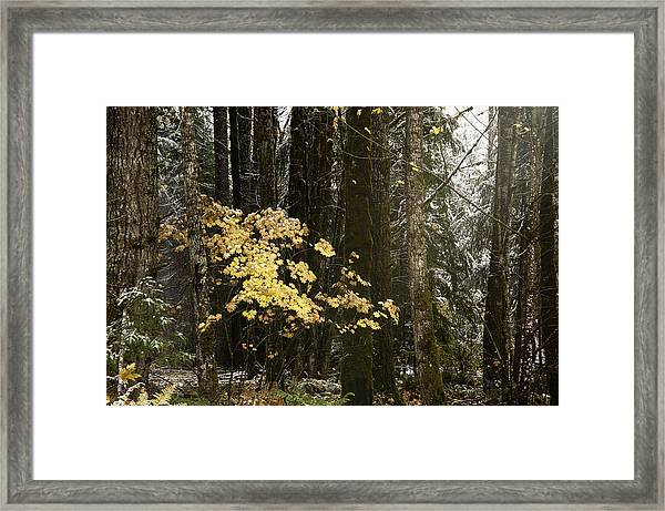 A Light In The Forest Framed Print