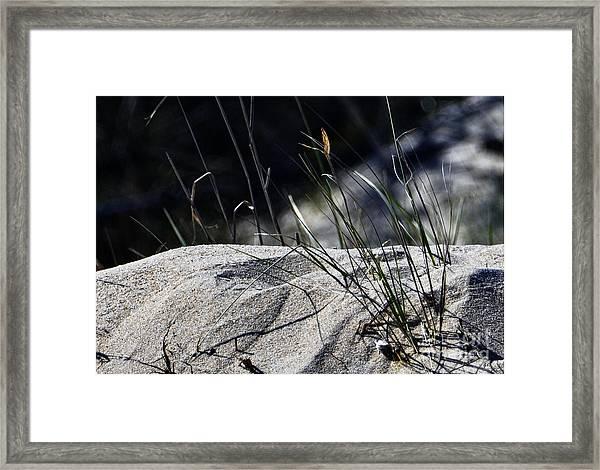 A Light Spring Breeze Framed Print