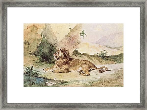 A Lion In The Desert Framed Print