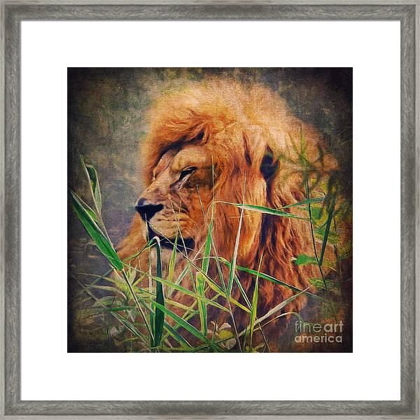 A Lion Portrait Framed Print