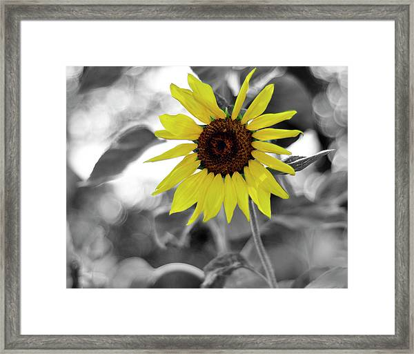 'a Little Color In Your Day' Framed Print